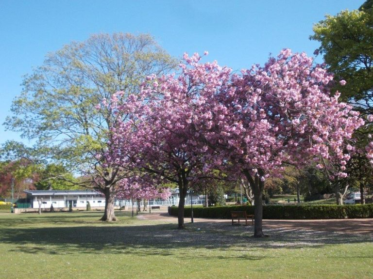 Hull named a Tree City of the World in global list