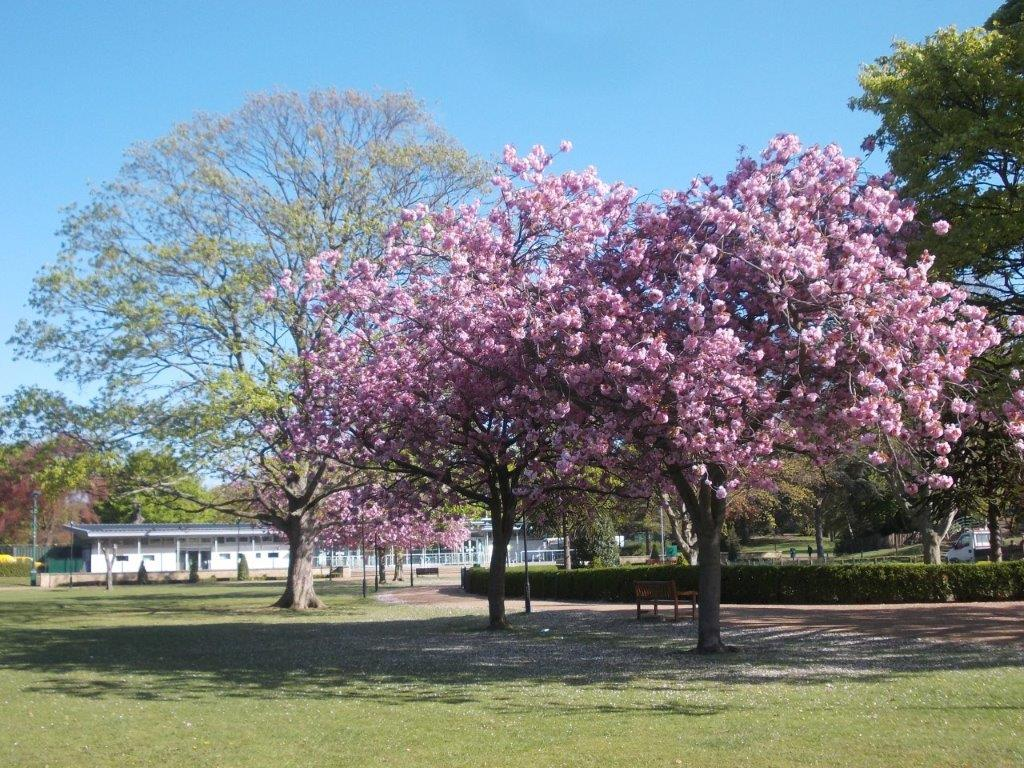 You are currently viewing Hull named a Tree City of the World in global list